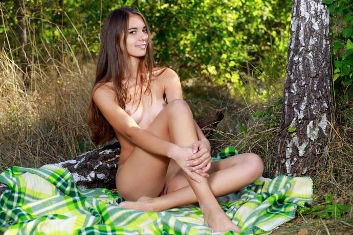 Голая Лиса отдыхает в берёзовой роще